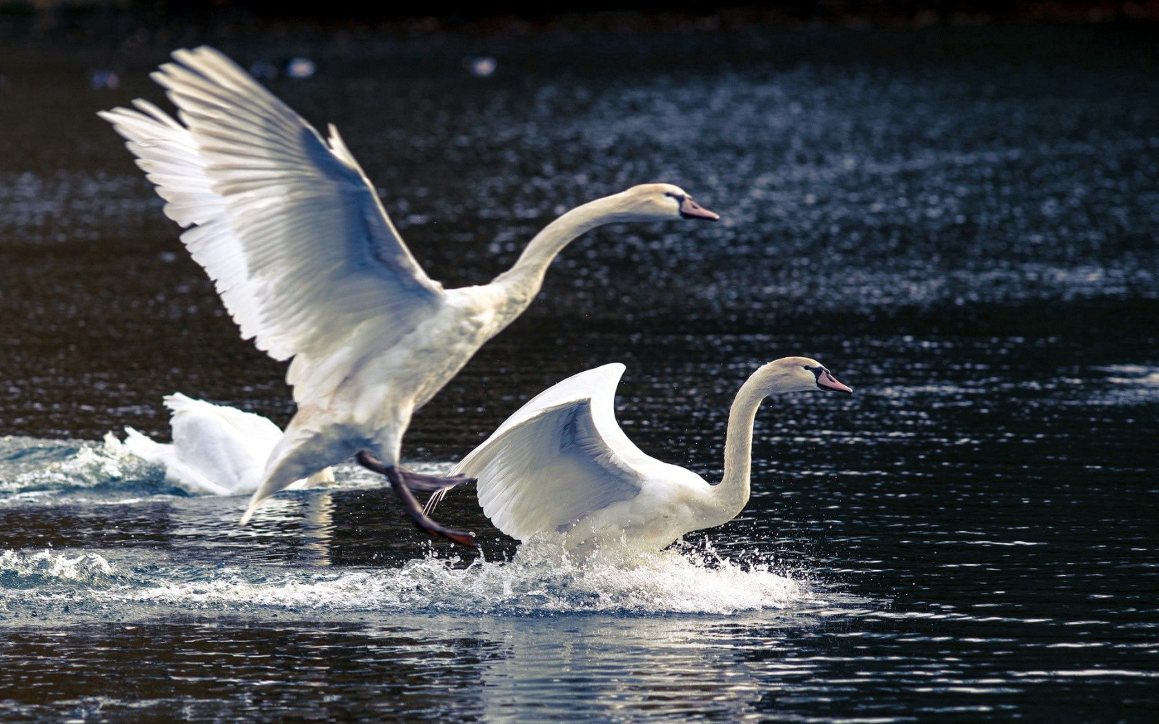 112552 download wallpaper Animals, Swans, Lake, Nature screensavers and pictures for free