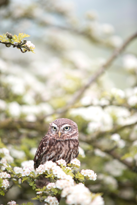 123419 Hintergrundbild herunterladen Tiere, Blumen, Eule, Vogel, Raubtier, Predator, Frühling - Bildschirmschoner und Bilder kostenlos