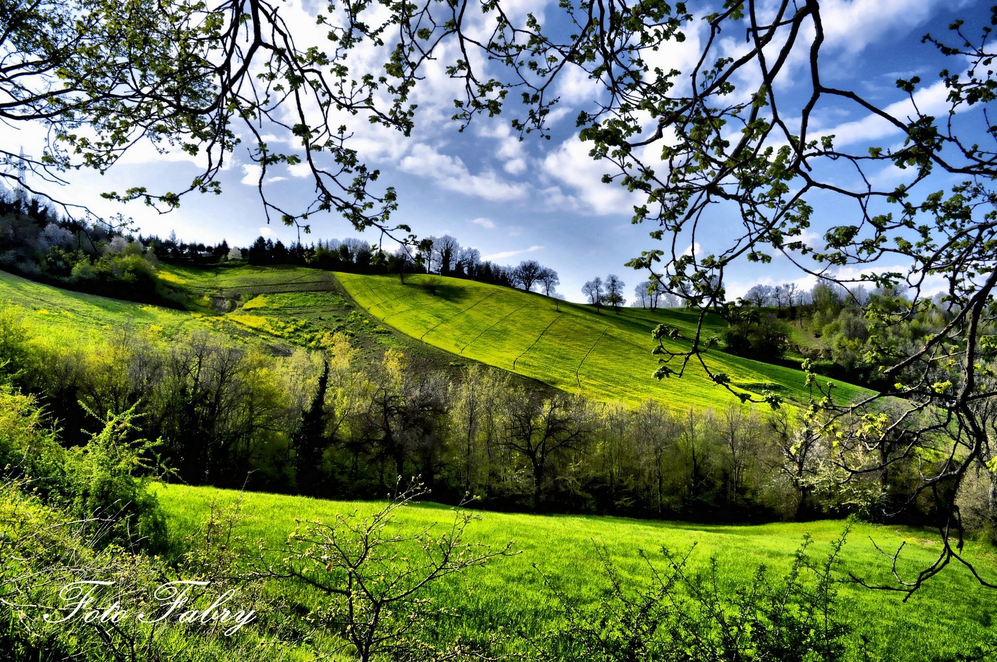 132729 Hintergrundbild herunterladen Frühling, Natur, Bäume, Felder, Grüne, Grünen - Bildschirmschoner und Bilder kostenlos