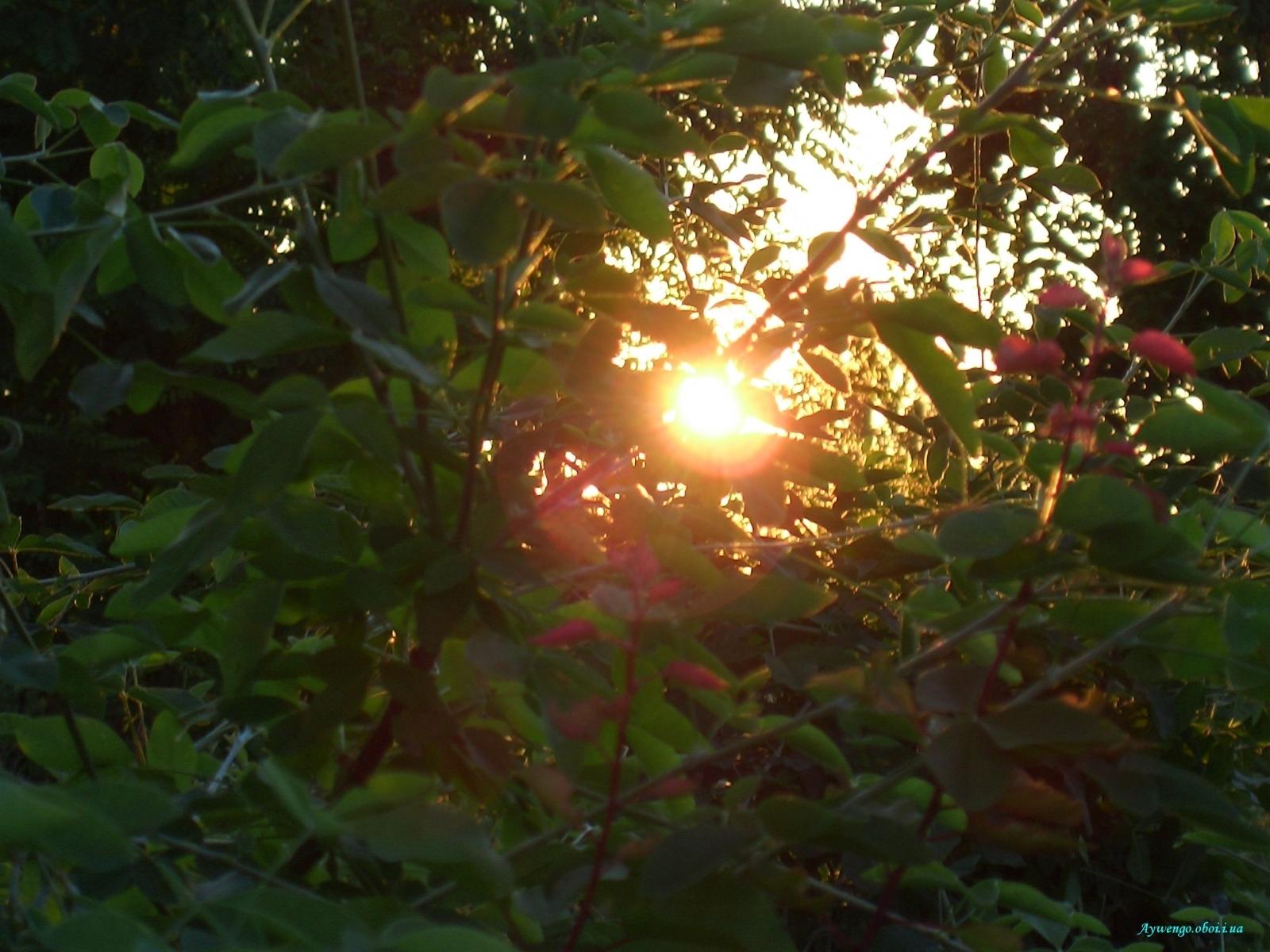 1872 скачать обои Растения, Закат, Солнце - заставки и картинки бесплатно