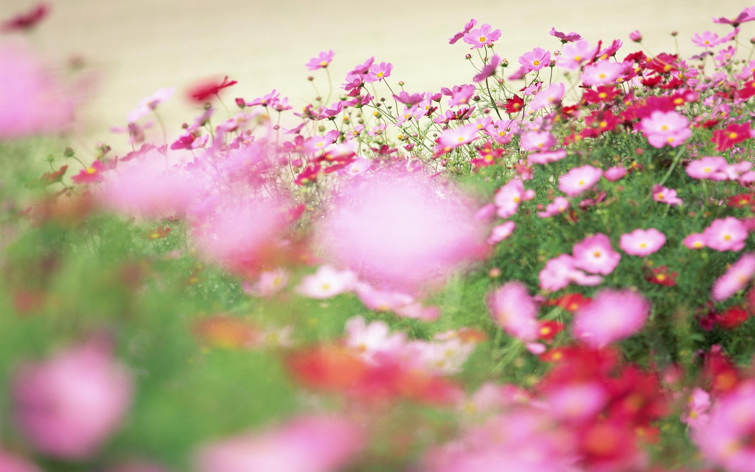 5196 скачать обои Растения, Цветы - заставки и картинки бесплатно