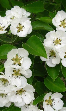 467 скачать обои Растения, Цветы - заставки и картинки бесплатно