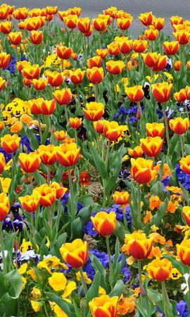 118027 télécharger le fond d'écran Fleurs, Parterre De Fleurs, Parterre, Rue, Tulipes, Culottes - économiseurs d'écran et images gratuitement