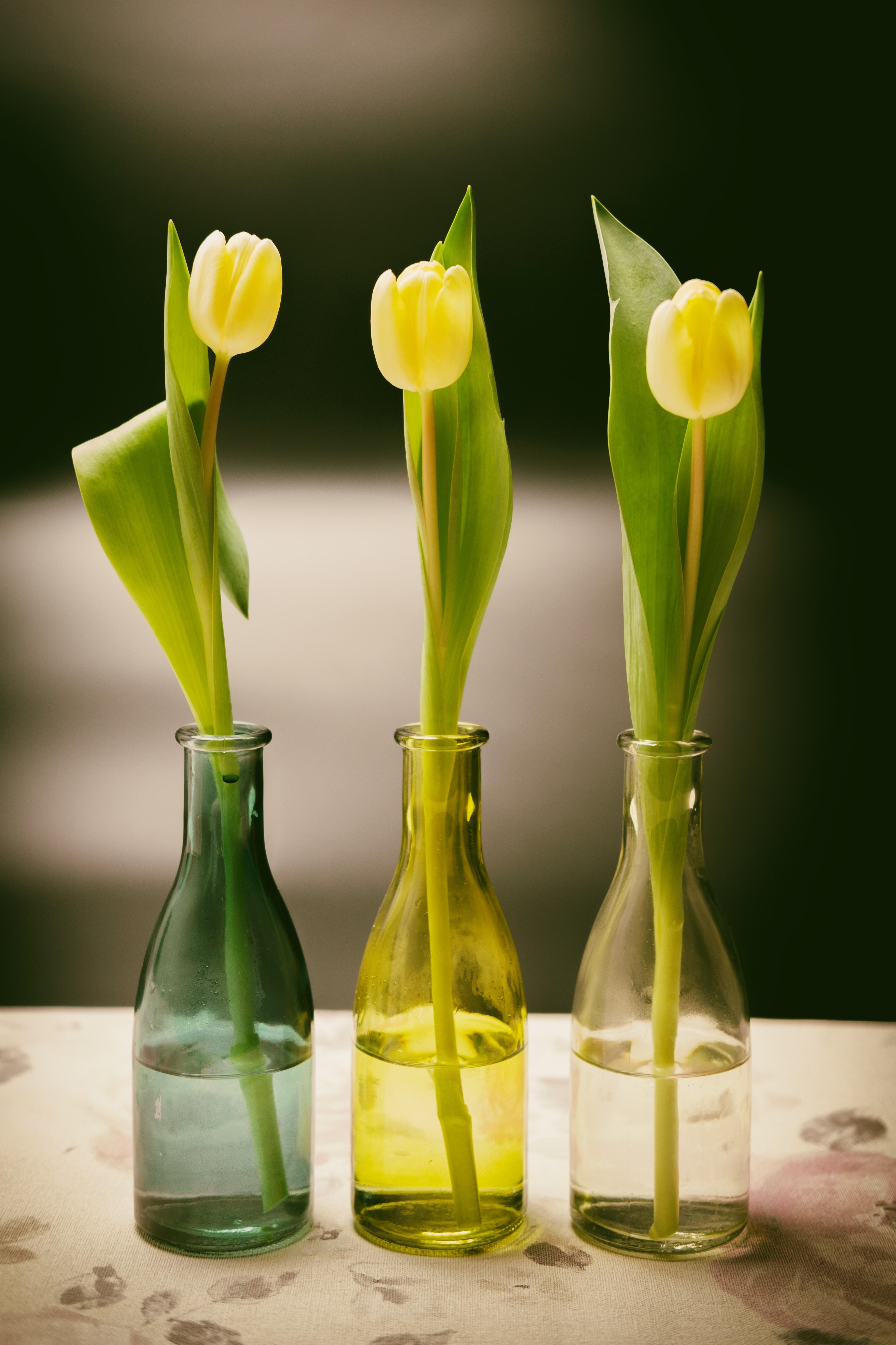 74596 Hintergrundbild herunterladen Tulpen, Blumen, Vase, Frühling, Flasche, Flaschen - Bildschirmschoner und Bilder kostenlos