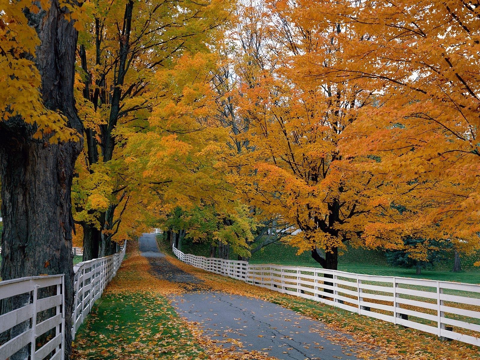 4042 скачать обои Пейзаж, Деревья, Дороги, Осень - заставки и картинки бесплатно