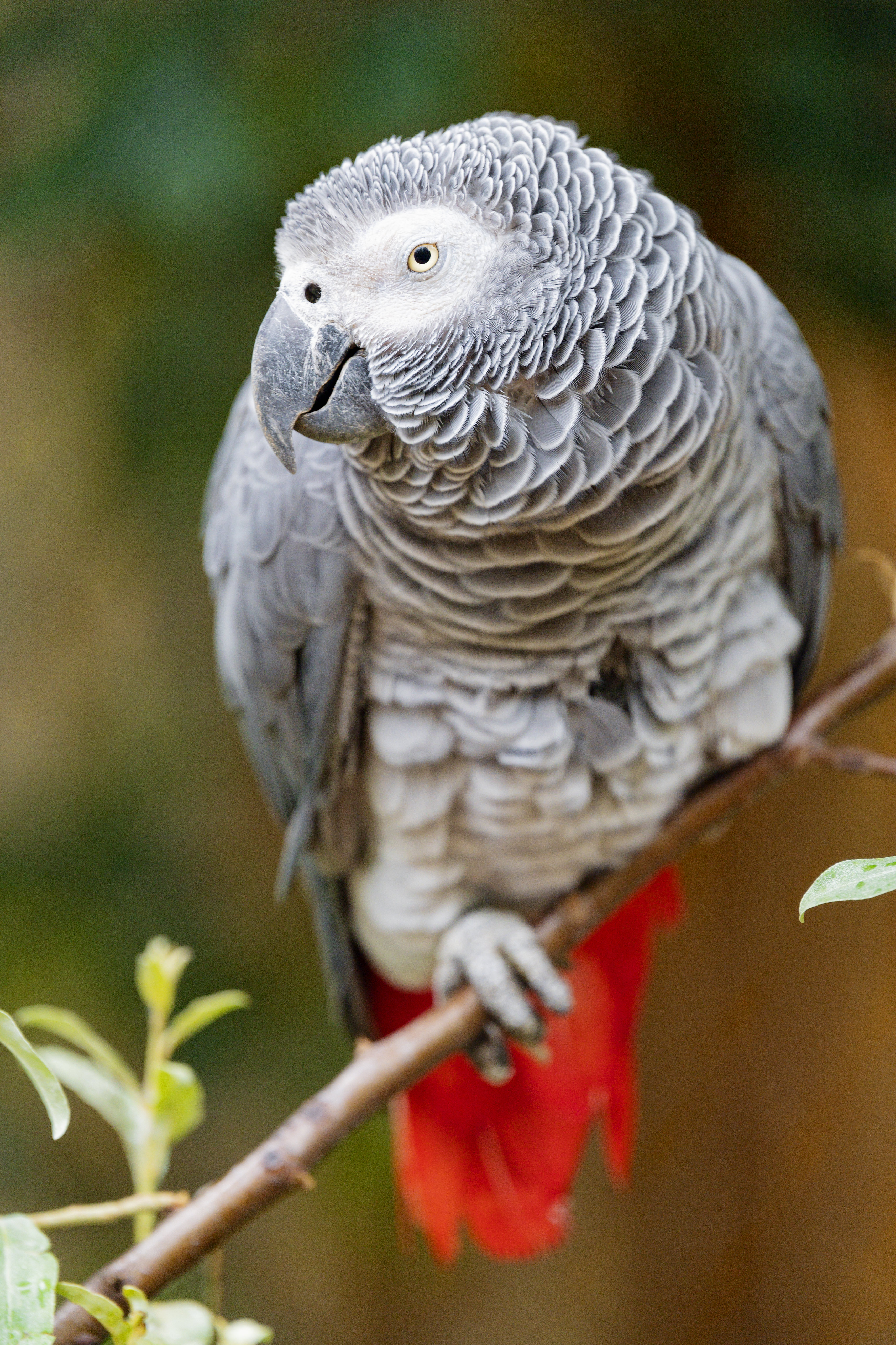 137316 download wallpaper Animals, Macaw, Parrots, Bird, Sight, Opinion, Branch screensavers and pictures for free