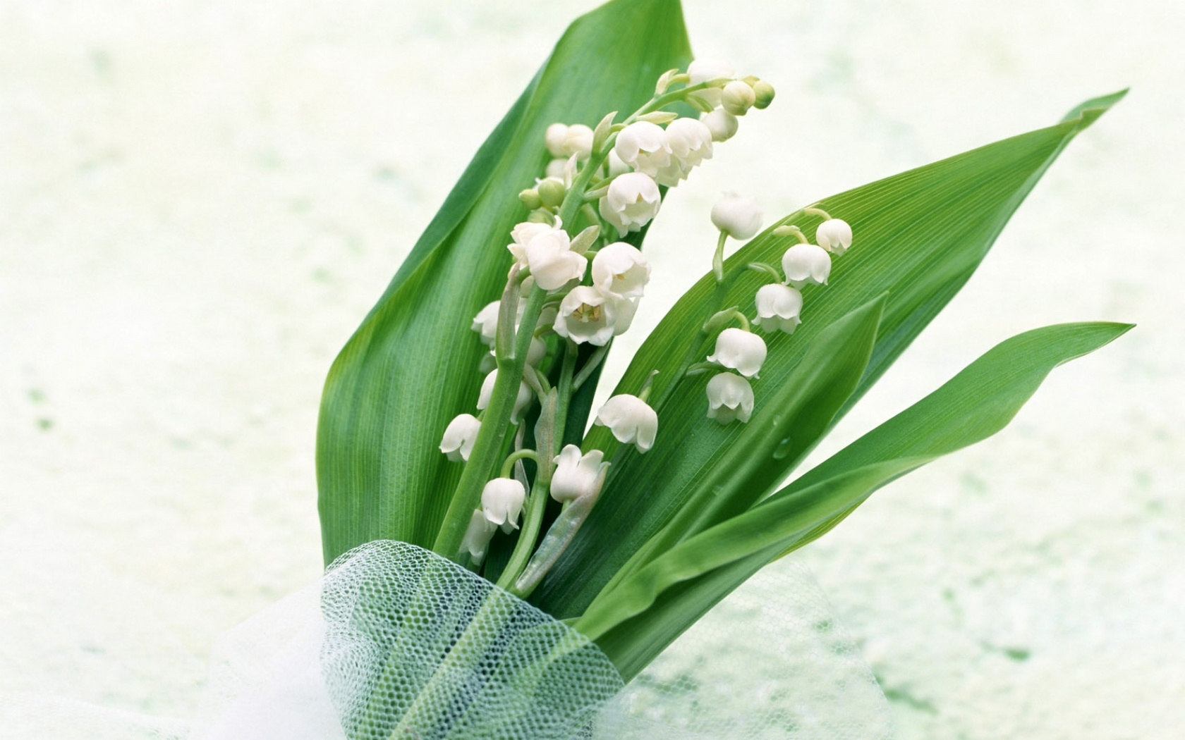 40739 скачать обои Ландыши, Растения, Цветы - заставки и картинки бесплатно