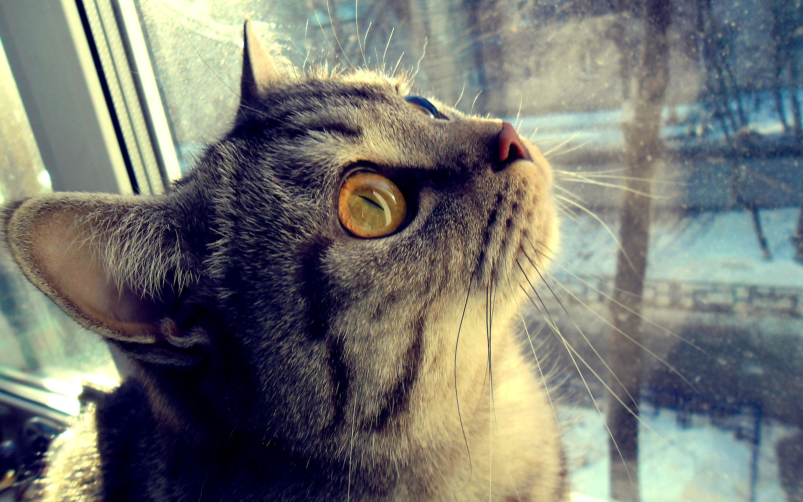 108289 download wallpaper Animals, Cat, Muzzle, Eyes, Window screensavers and pictures for free