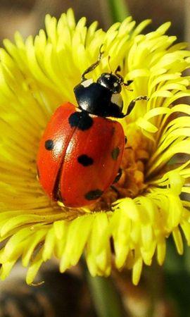 30582 Salvapantallas y fondos de pantalla Insectos en tu teléfono. Descarga imágenes de Insectos, Mariquitas gratis