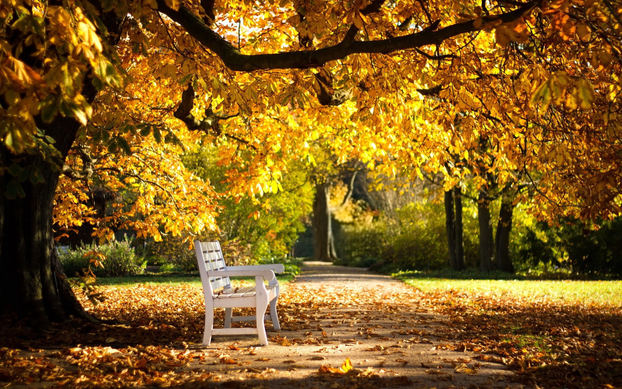 80465 Screensavers and Wallpapers Bench for phone. Download Nature, Autumn, Park, Foliage, Bench pictures for free