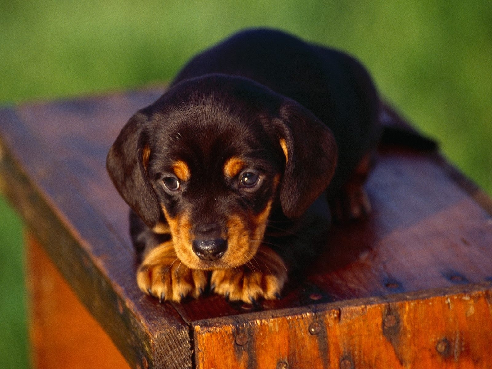 8115 download wallpaper Animals, Dogs screensavers and pictures for free
