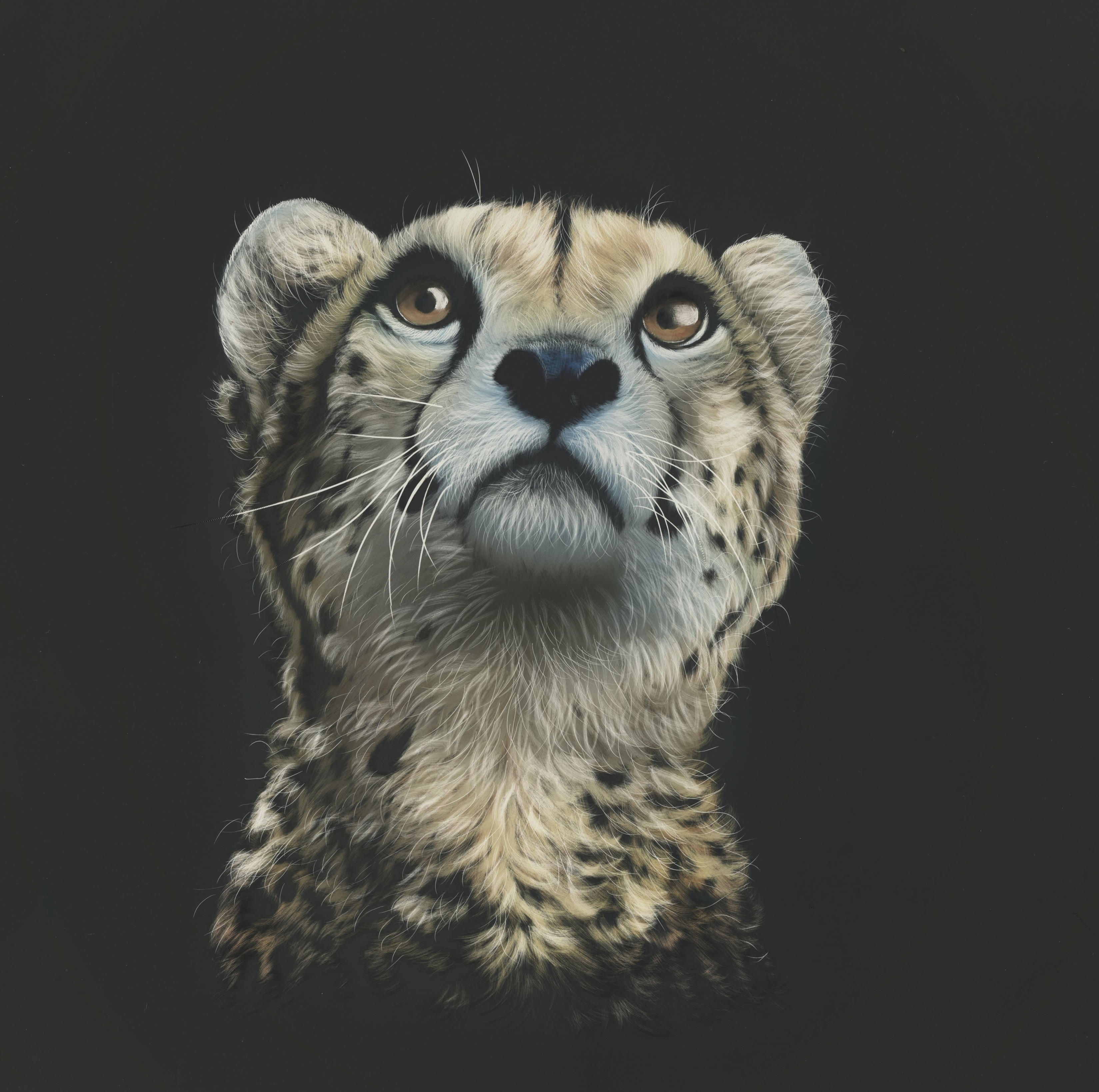 120752 download wallpaper Cheetah, Art, Picture, Drawing, Predator, Sight, Opinion screensavers and pictures for free