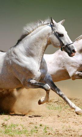 111160 baixar papel de parede Animais, Cavalos, Pó, Pulando, Salto, Casal, Par - protetores de tela e imagens gratuitamente