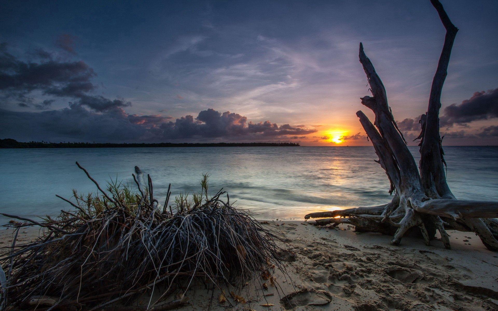 106004 Заставки и Обои Песок на телефон. Скачать Природа, Море, Песок, Берег, Коряги картинки бесплатно