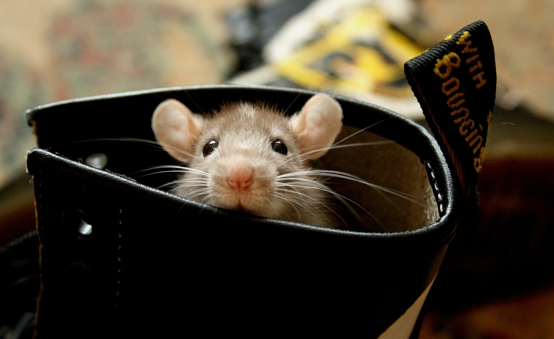 59683 download wallpaper Animals, Rat, Hamster, Rodent, Ears, Climb screensavers and pictures for free