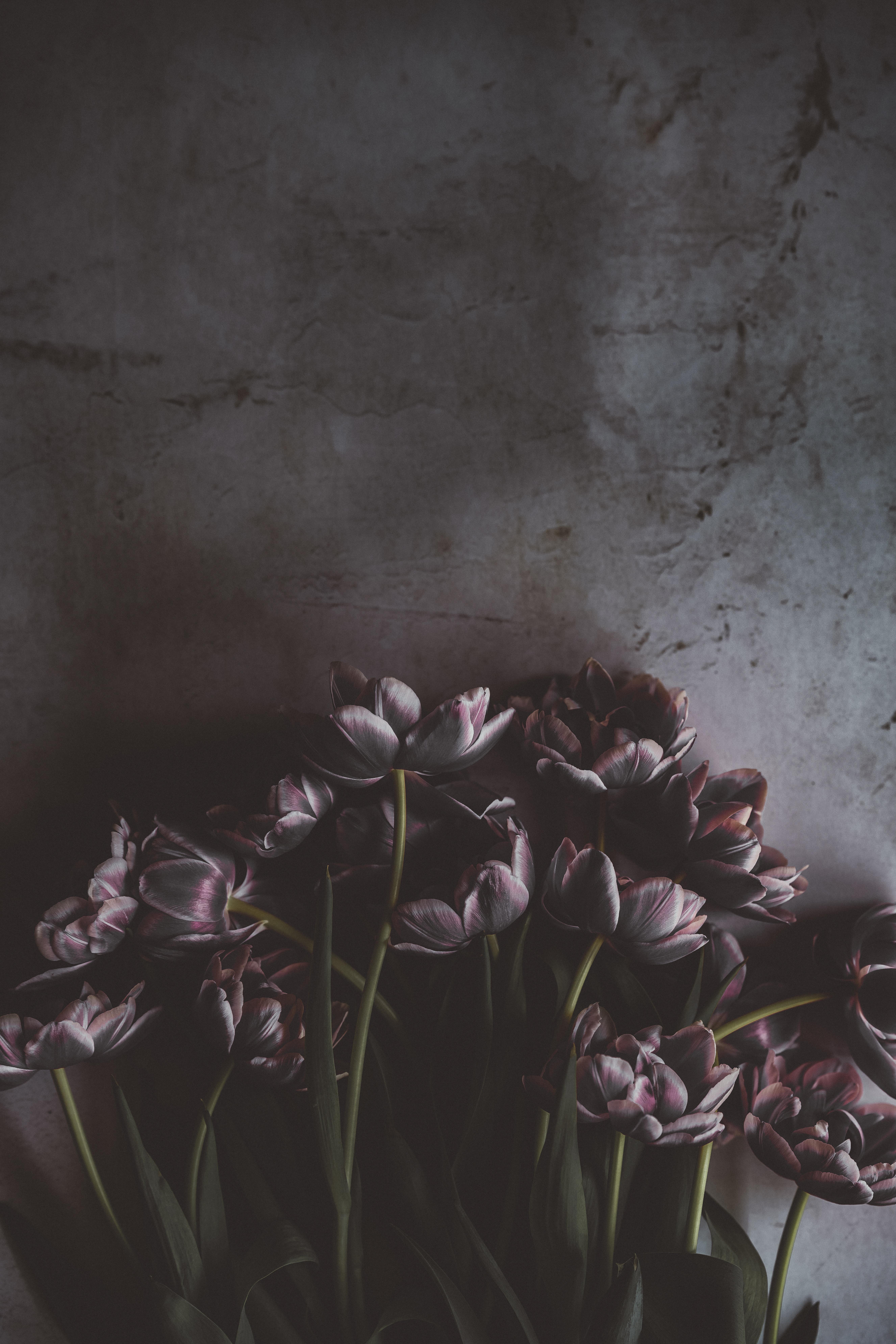 72641 Hintergrundbild herunterladen Tulpen, Blumen, Dunkel, Strauß, Bouquet, Wand - Bildschirmschoner und Bilder kostenlos