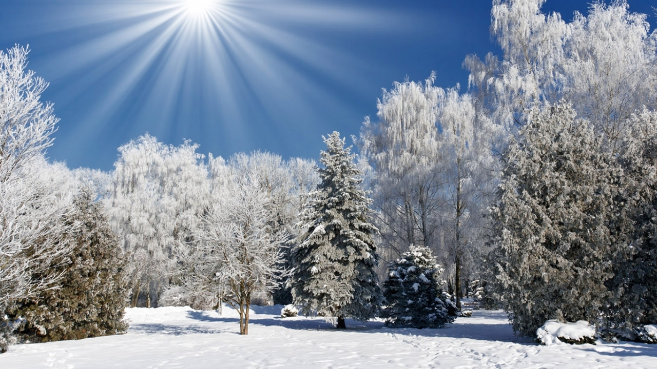 44521 download wallpaper Landscape, Winter, Nature, Trees, Snow screensavers and pictures for free