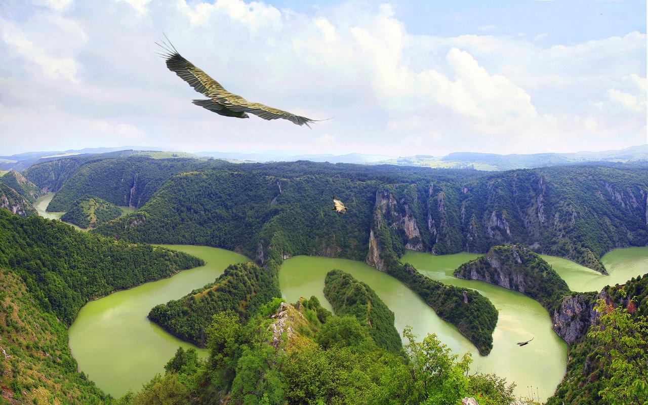 13752 скачать обои Животные, Пейзаж, Птицы, Река - заставки и картинки бесплатно