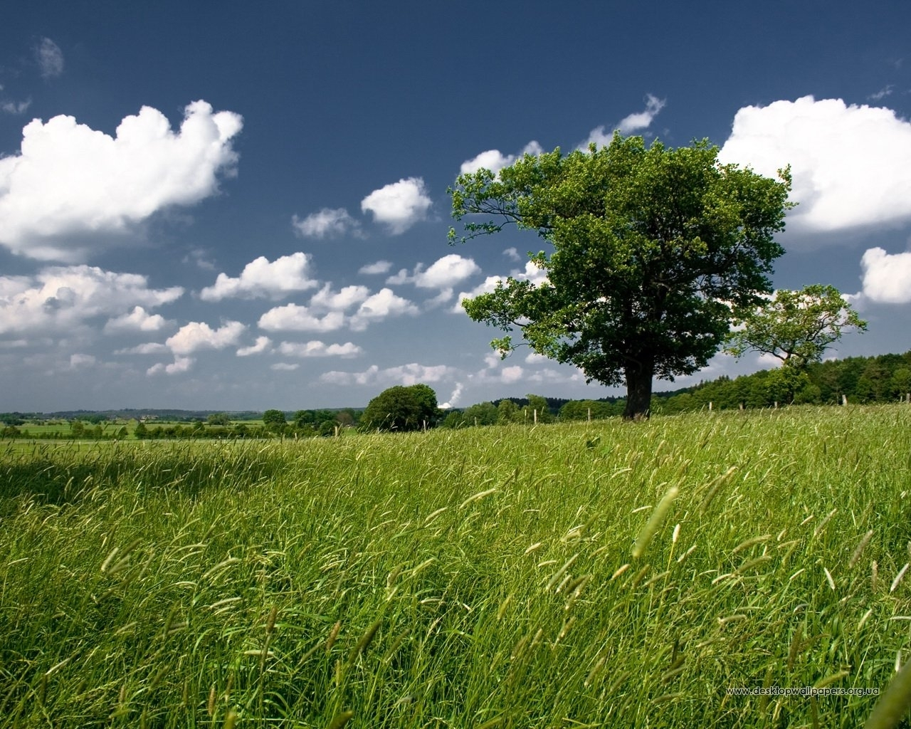 3245 download wallpaper Landscape, Trees, Grass, Sky screensavers and pictures for free