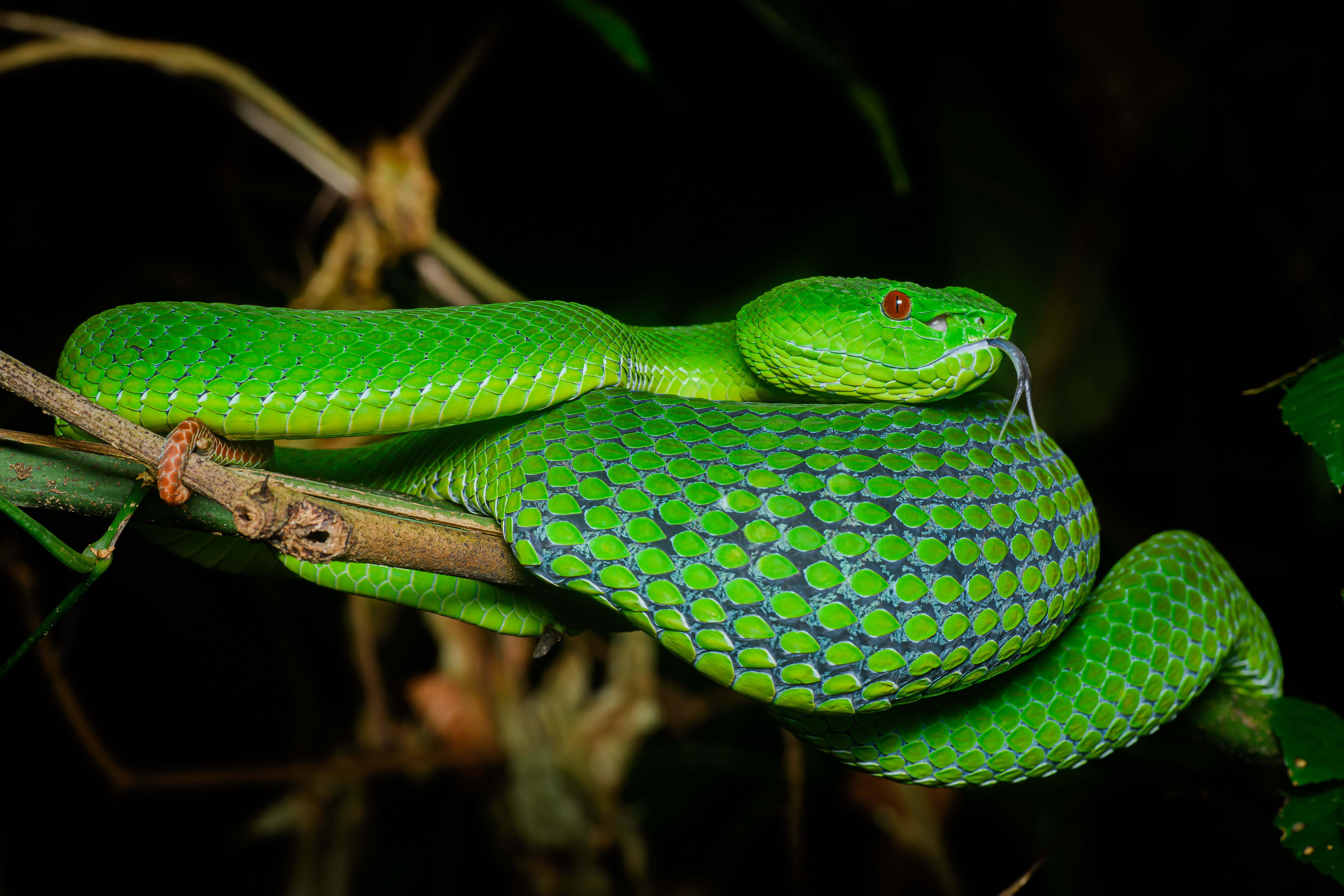 84044 Screensavers and Wallpapers Snake for phone. Download Animals, Reptile, Snake, Scales, Scale, Terrarium pictures for free