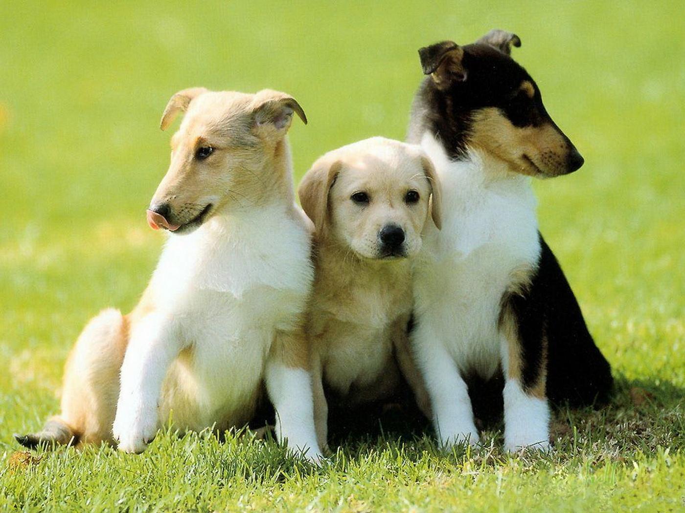 24279 скачать обои Животные, Собаки - заставки и картинки бесплатно