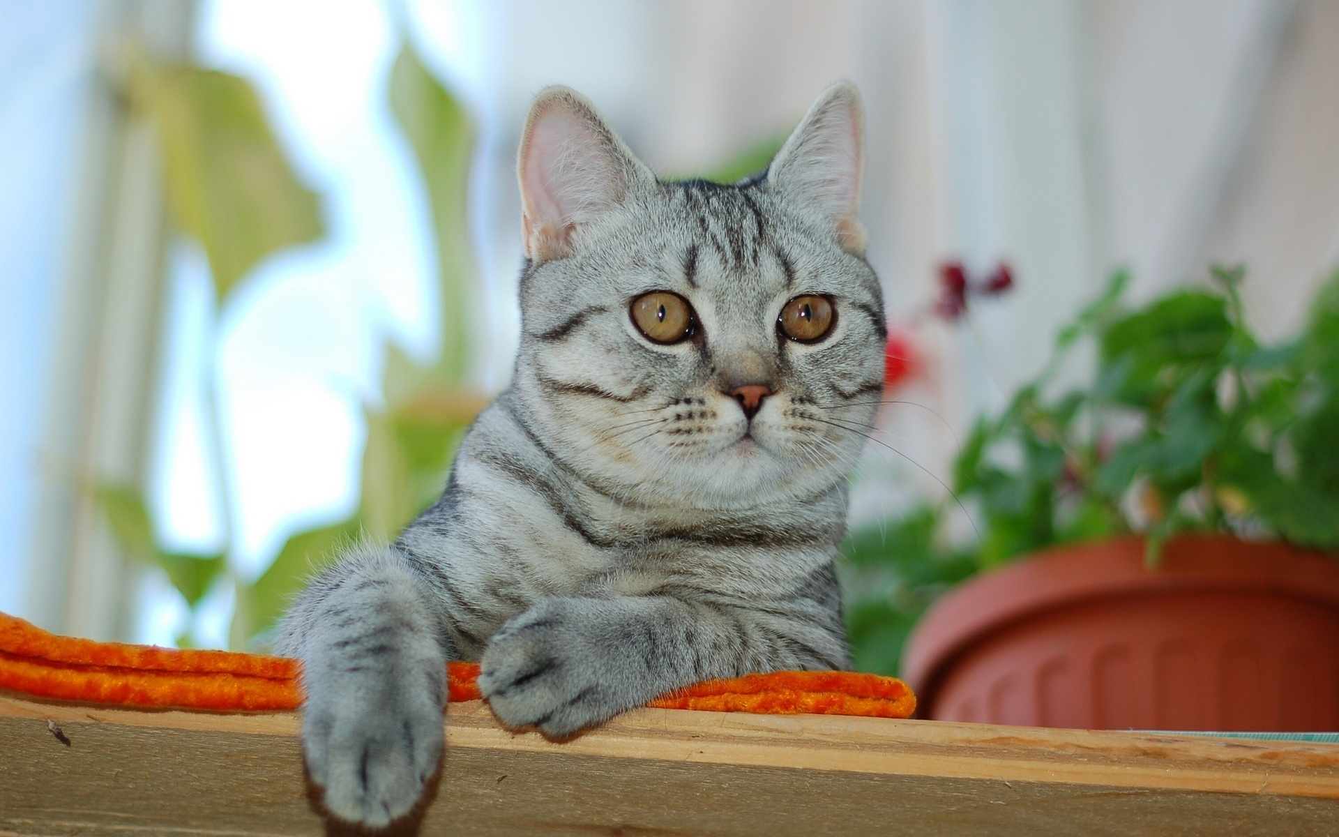 49609 download wallpaper Animals, Cats screensavers and pictures for free
