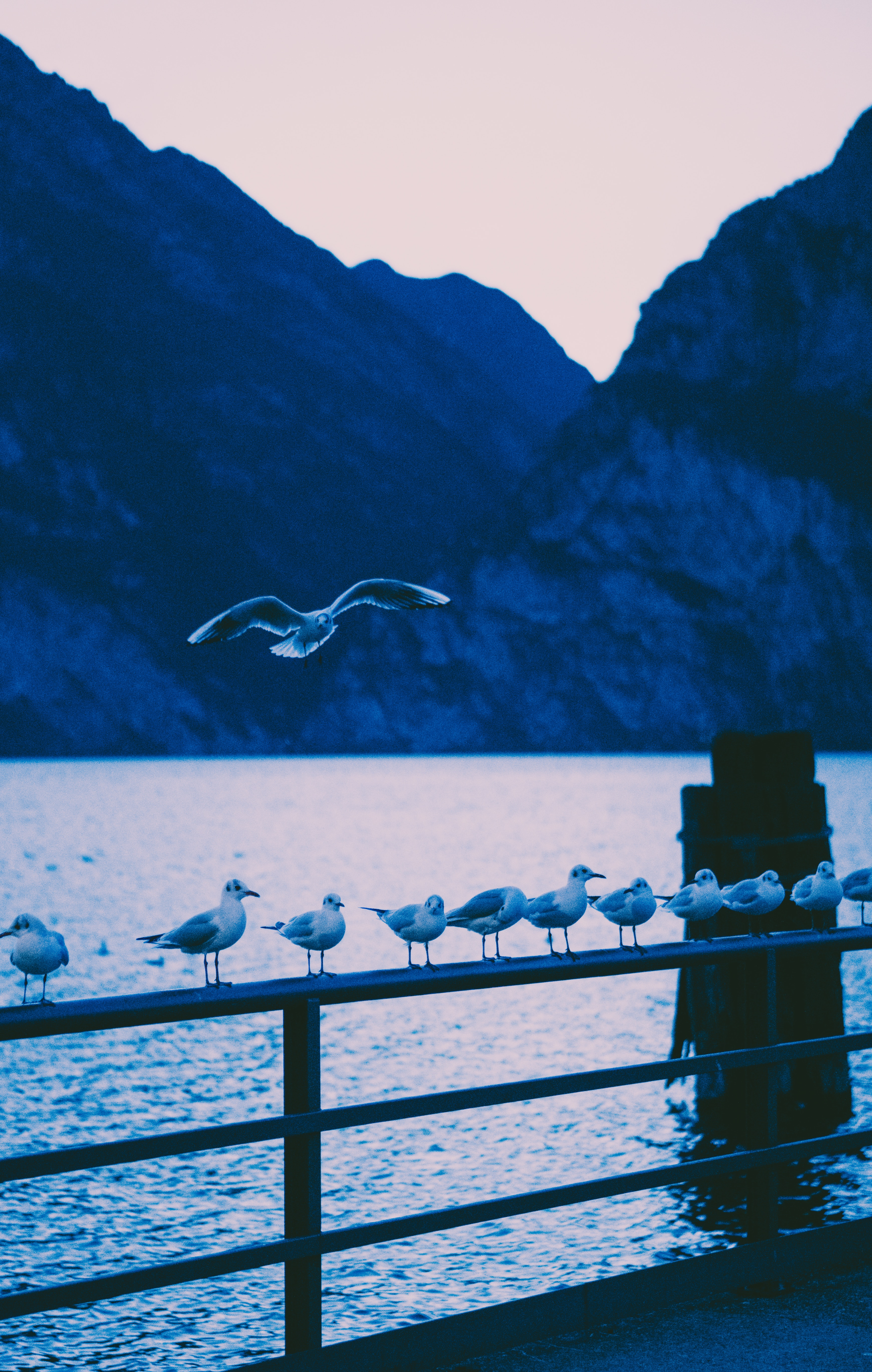 125932 download wallpaper Animals, Railings, Handrail, Sea, Shore, Bank, Birds, Seagulls screensavers and pictures for free
