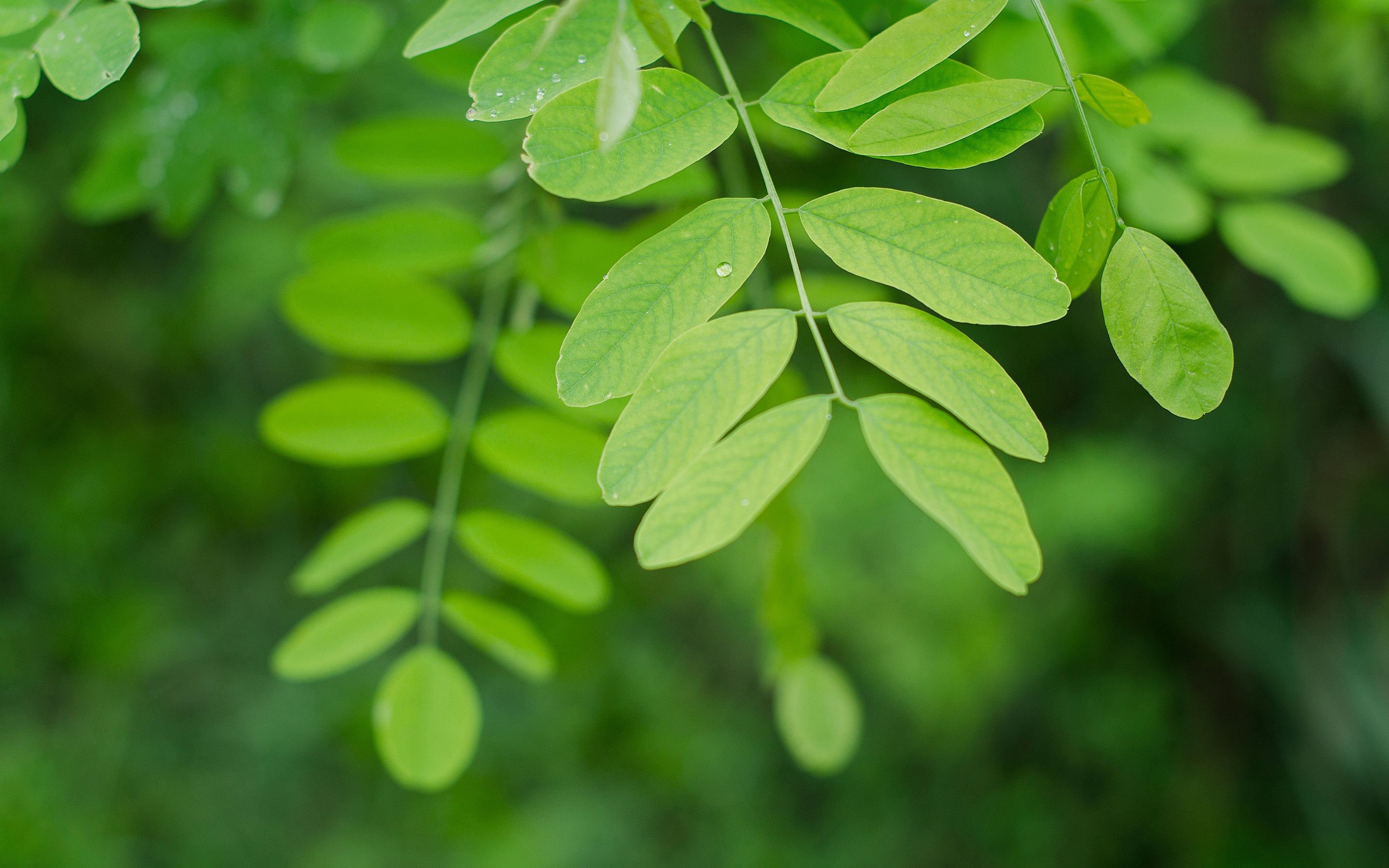 149037 download wallpaper Leaves, Macro, Branch screensavers and pictures for free