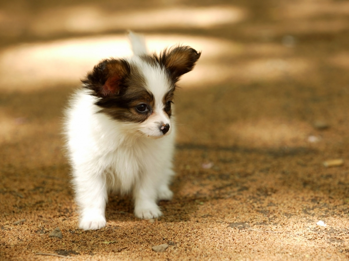 6054 download wallpaper Animals, Dogs screensavers and pictures for free