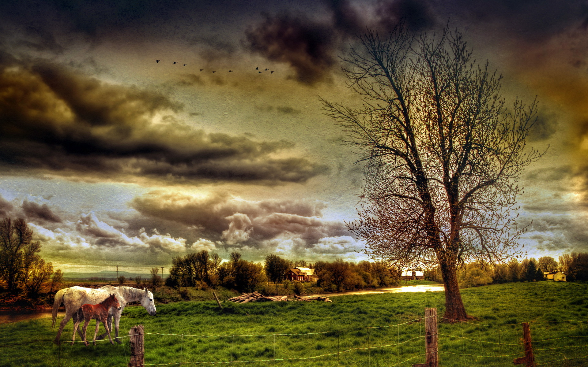 24039 download wallpaper Animals, Landscape, Fields, Horses screensavers and pictures for free