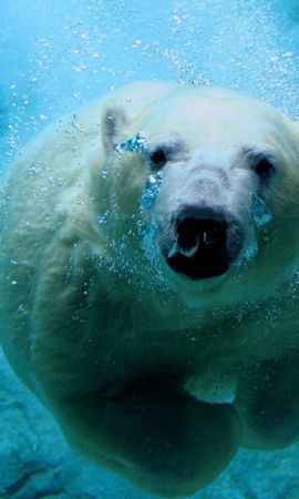 46062 baixar papel de parede Animais, Bears - protetores de tela e imagens gratuitamente