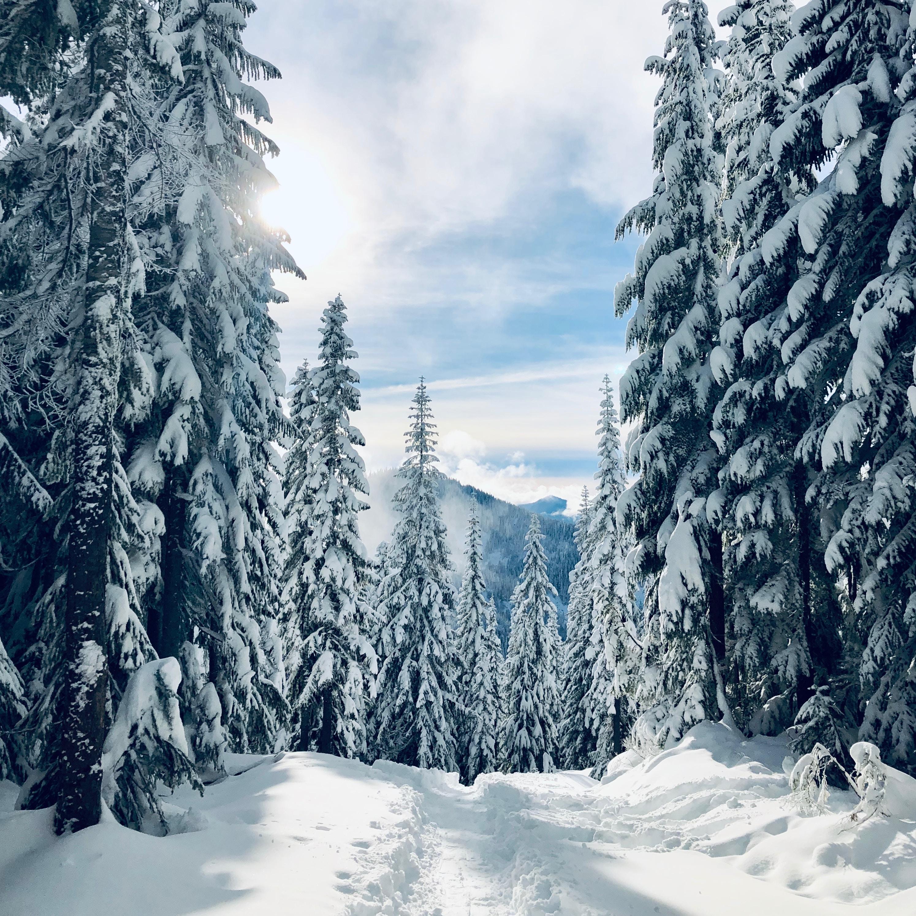 60778 скачать обои Природа, Лес, Зима, Снег, Деревья, Тропинка, Следы, Елки - заставки и картинки бесплатно