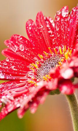 15209 descargar fondo de pantalla Plantas, Flores, Drops: protectores de pantalla e imágenes gratis