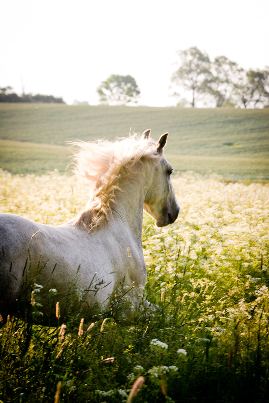 18318 download wallpaper Horses, Animals screensavers and pictures for free