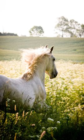 18318 download wallpaper Animals, Horses screensavers and pictures for free