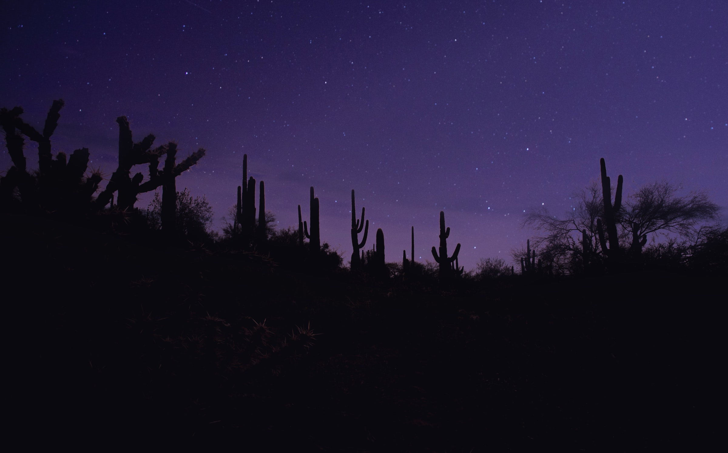152851 скачать обои Кактусы, Ночь, Темные, Силуэты, Темный, Фиолетовый - заставки и картинки бесплатно