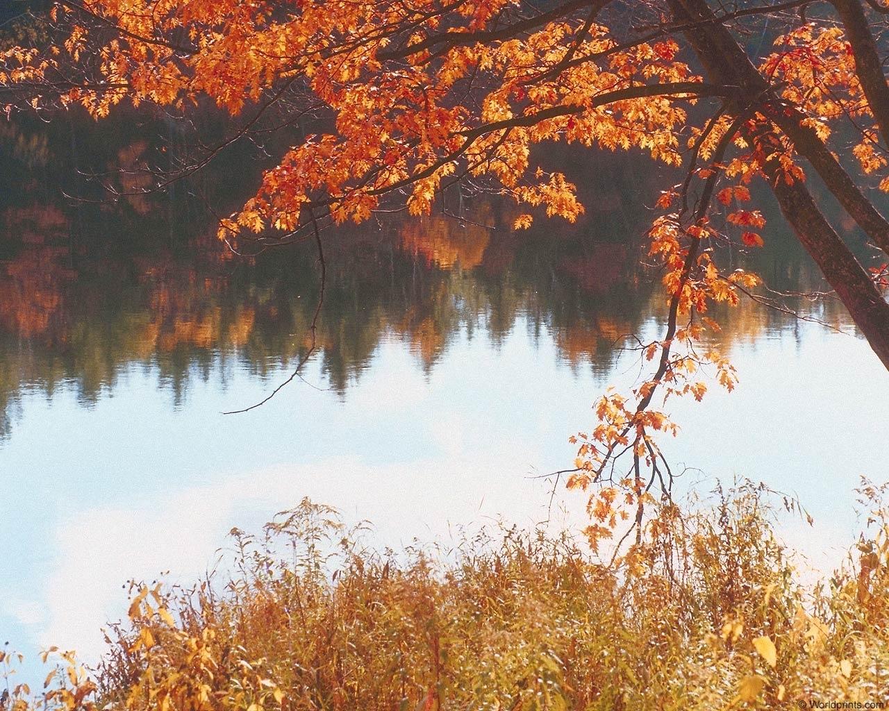 5450 скачать обои Пейзаж, Река, Осень - заставки и картинки бесплатно