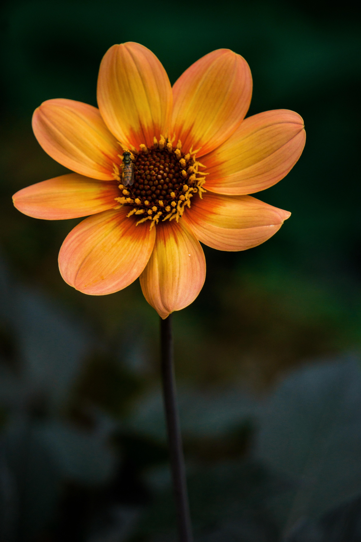 手機的124893屏保和壁紙昆虫。 免費下載 花卉, 花, 盛开, 开花, 植物, 昆虫 圖片