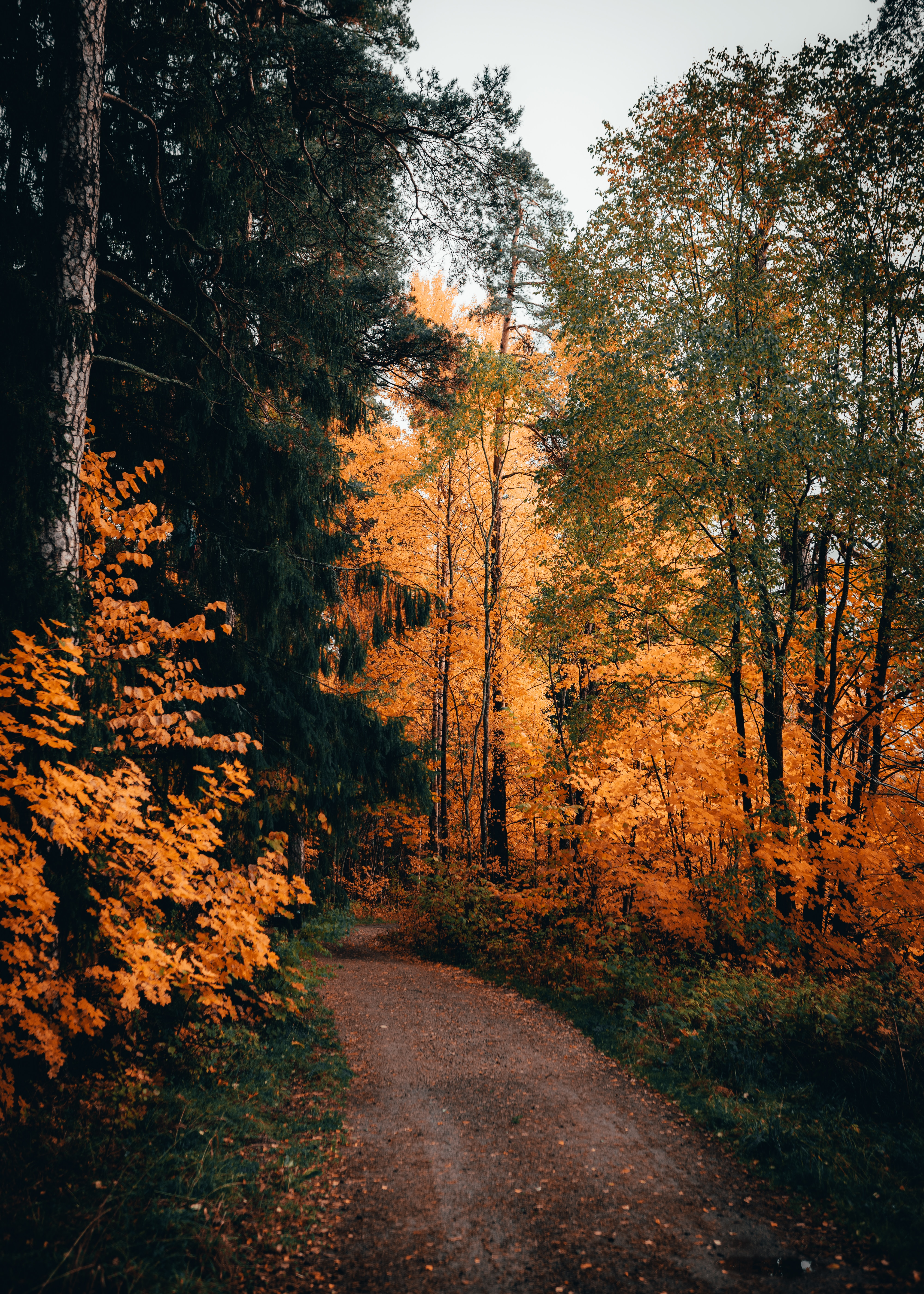 118609 download wallpaper Nature, Trees, Autumn, Forest, Path screensavers and pictures for free