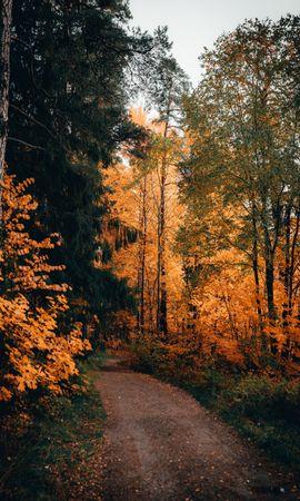 118609 Заставки и Обои Деревья на телефон. Скачать Тропинка, Лес, Осень, Деревья, Природа картинки бесплатно