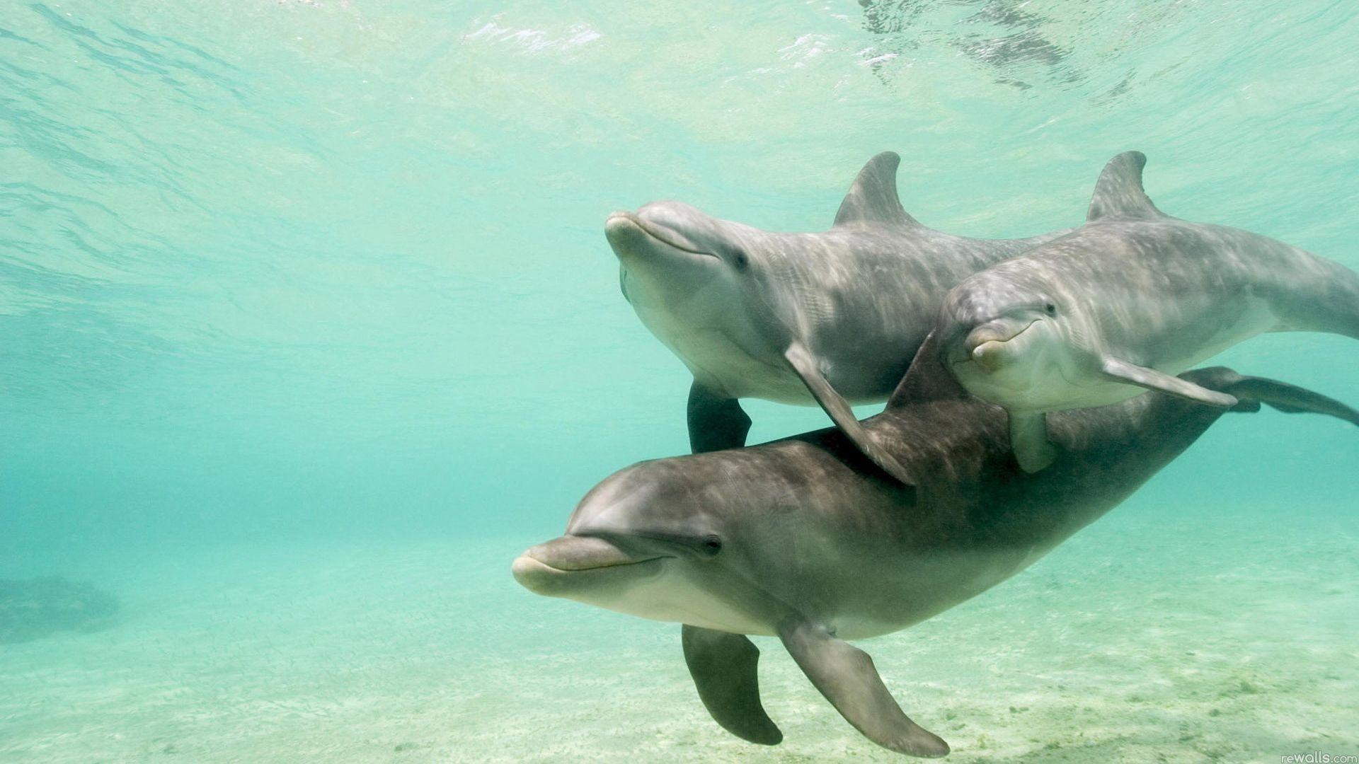 87832 download wallpaper Animals, Dolfins, Family, Underwater World, To Swim, Swim, Care screensavers and pictures for free