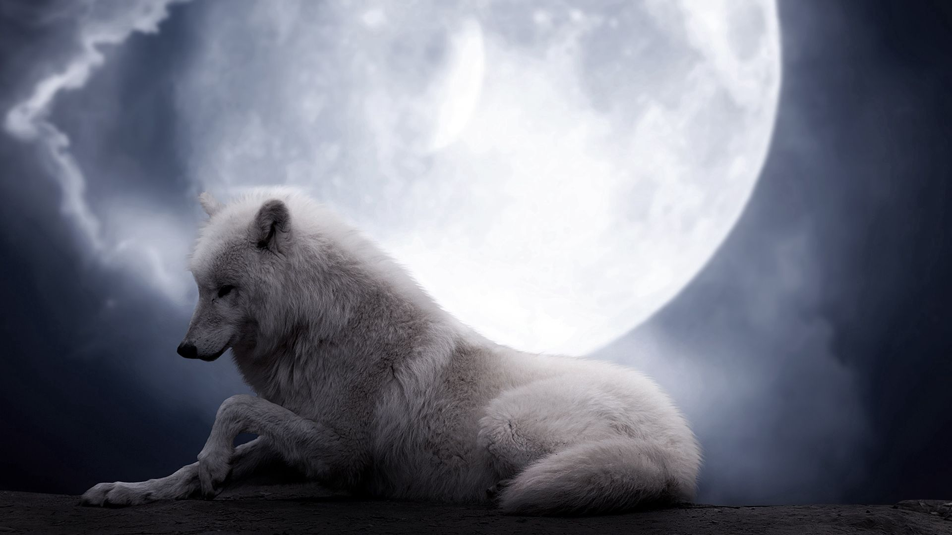 125963 download wallpaper Animals, Wolf, Moon, To Lie Down, Lie, Predator screensavers and pictures for free