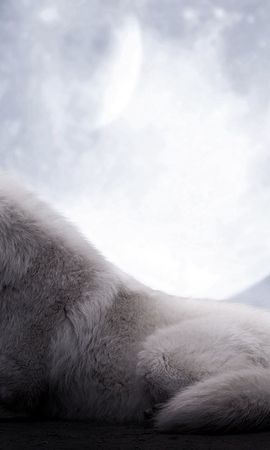 125963 baixar papel de parede Animais, Lobo, Lua, Deitar-Se, Mentir, Predator, Predador - protetores de tela e imagens gratuitamente