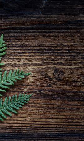 61749 скачать обои Минимализм, Папоротник, Растение, Листья - заставки и картинки бесплатно