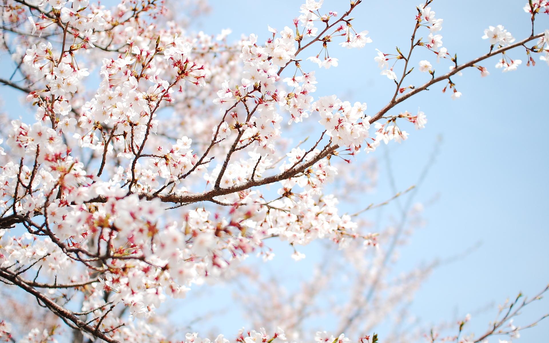 14751 descargar fondo de pantalla Plantas, Flores, Árboles: protectores de pantalla e imágenes gratis
