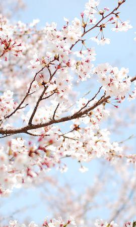 14751 скачать обои Растения, Цветы, Деревья - заставки и картинки бесплатно