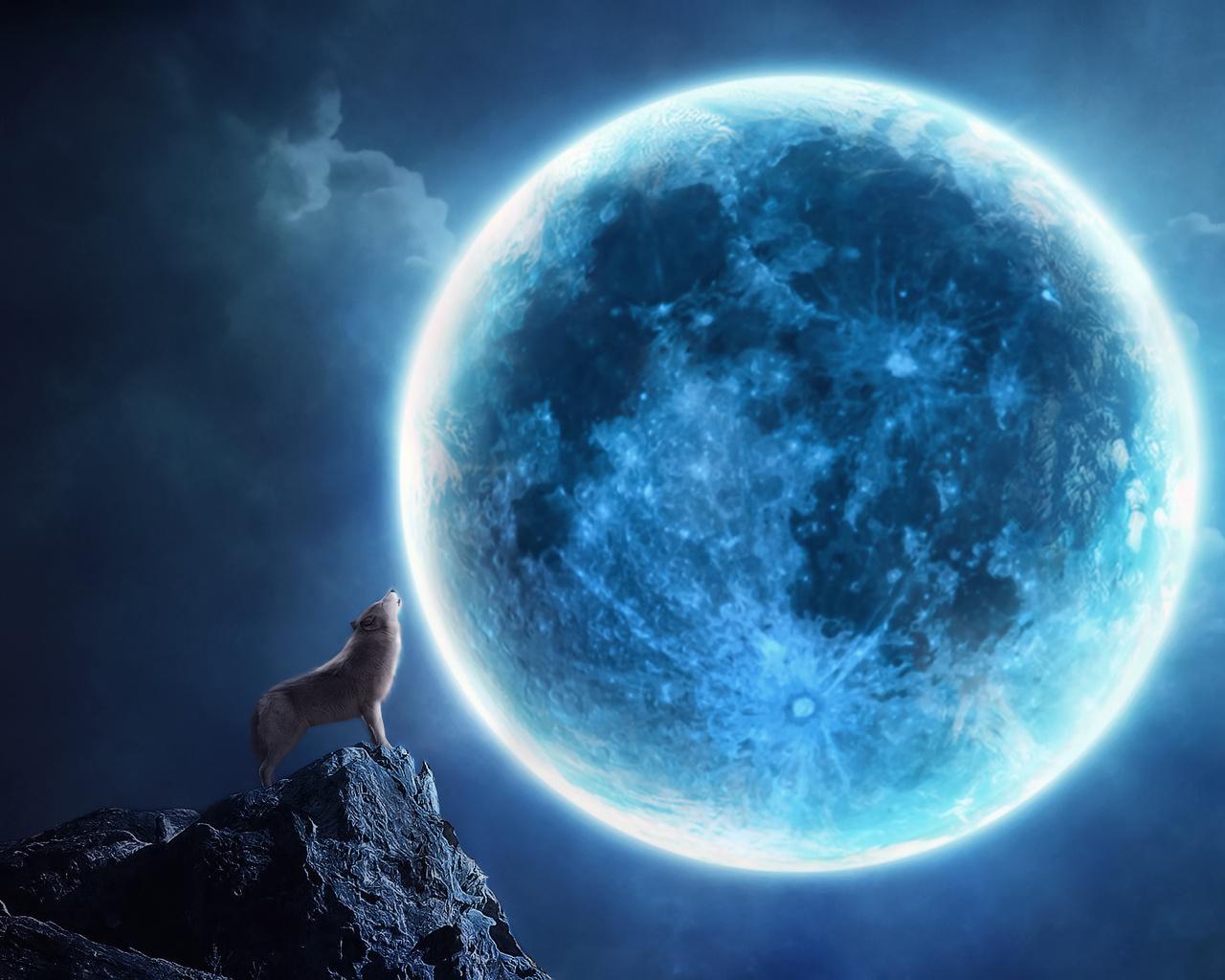 18002 免費下載壁紙 动物, 狼, 夜, 月球 屏保和圖片