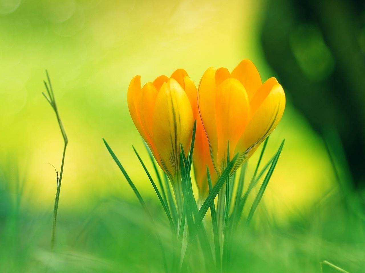 37735 скачать обои Растения, Цветы - заставки и картинки бесплатно