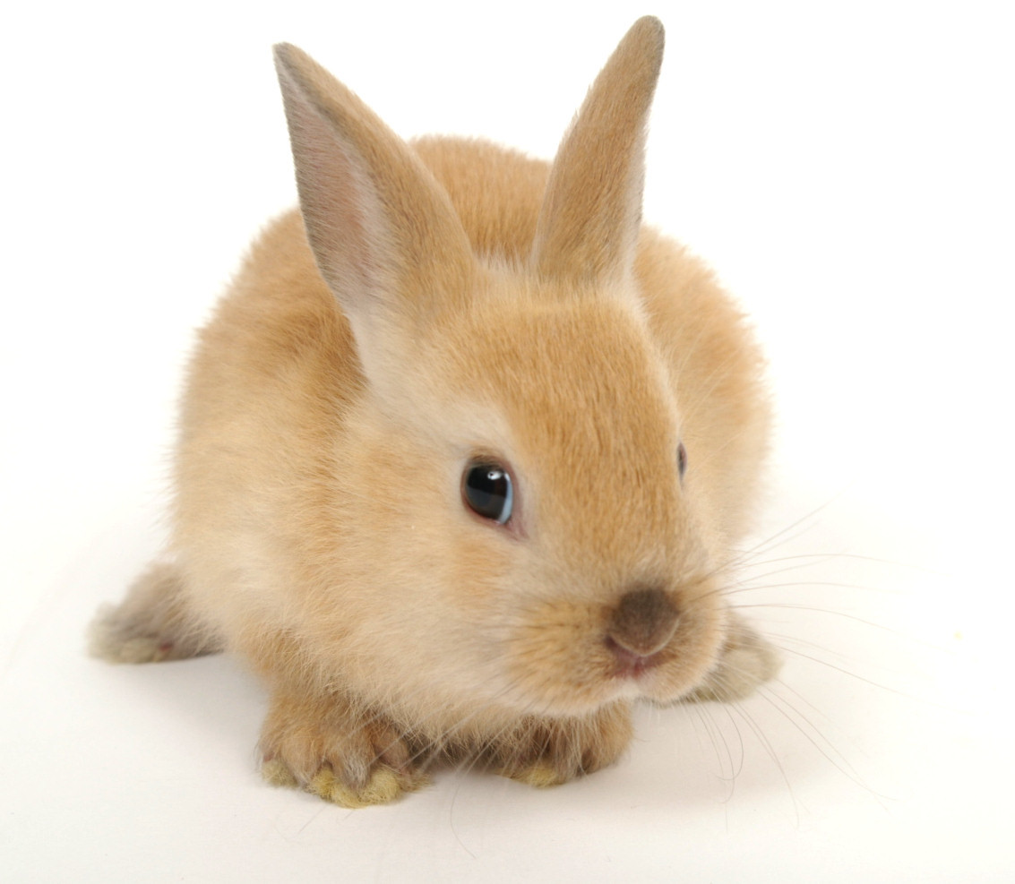 17355 Screensavers and Wallpapers Rabbits for phone. Download Animals, Rabbits pictures for free