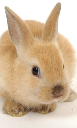 17355 download wallpaper Animals, Rabbits screensavers and pictures for free